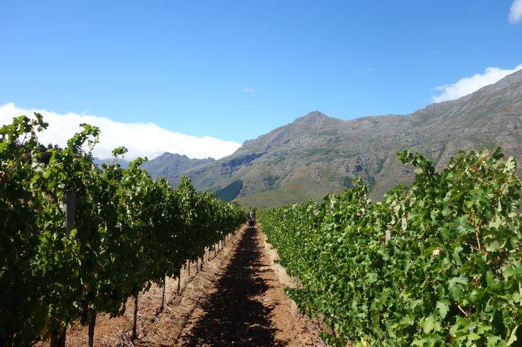 De Kaapse Wijnlanden