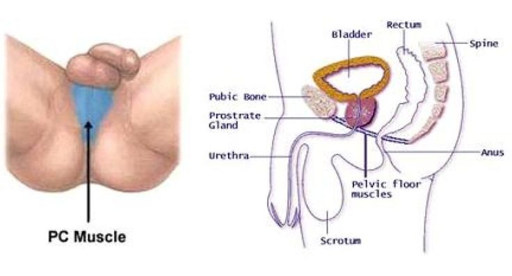 Pelvic Exercise to boost your sperm motility