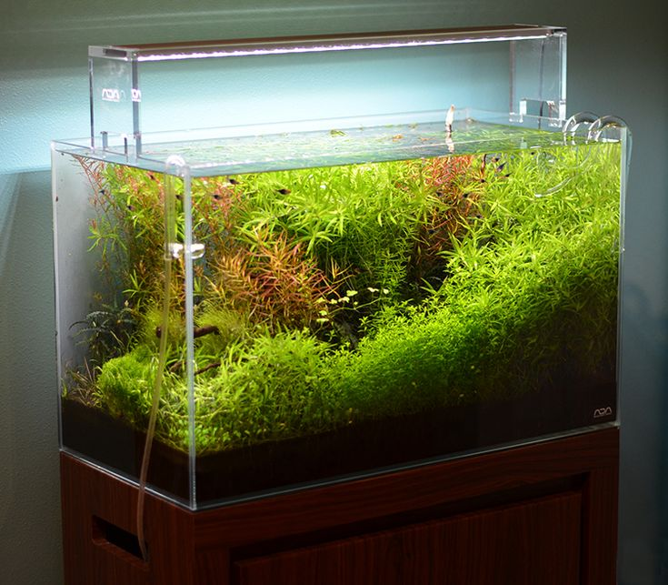 17 best ideas about tropical fish store on pinterest for Fish aquarium store