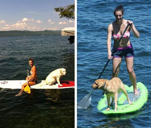 dogs paddleboarding lake george ny