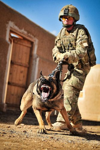 Vigo the Military Working Dog with his Handler in Afghanistan