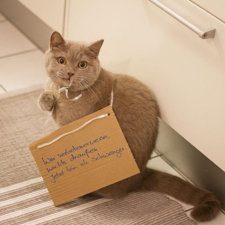Katzenbuch: Klartext zur Unschuldsmiene