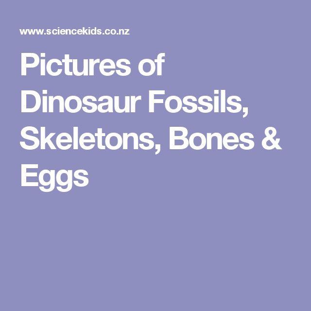 Pictures of Dinosaur Fossils, Skeletons, Bones & Eggs
