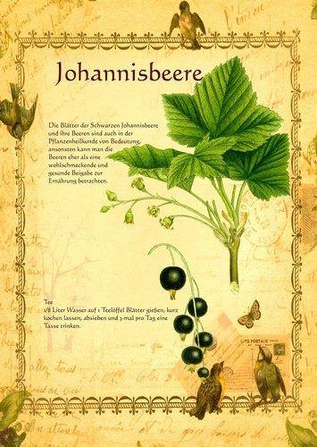 Johannisbeere http://www.kraeuter-verzeichnis.de