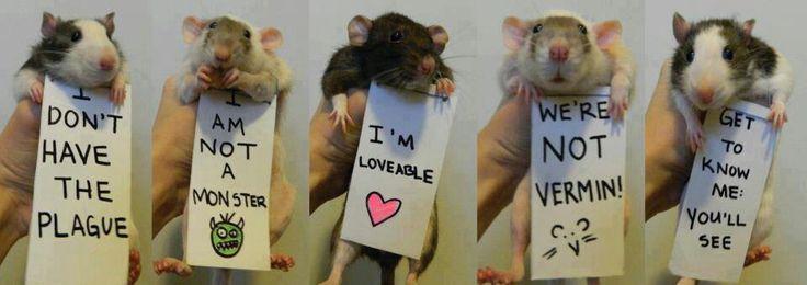 Rat♡♥