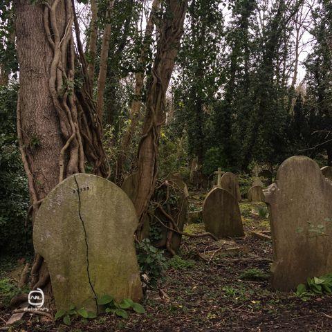 nalblog.com nalブログ。写真と旅と言葉たち ロンドン観光 ハイゲイト墓地 身の毛もよだつ?穴場スポット ロンドン2週目、定番スポットには一通り行った頃で夜はノースロンドンのカムデン辺りで約束があったのでそれまでちょっと郊外の穴場スポットはないかとガイドブックを見ていると、見つけました。穴場ススポットのツアー項目にタワー・オブ・ロンドンとセントポールズ大聖堂の裏側ツアーと並んで「ハイゲイト墓地ツアー」なるものを見つけました。イギリスの墓地ってどんなものだろう?地図で見るとまわりに大きな公園もあったので散歩がてら行ってみることにしました。今回の散策ルートは、ハイゲイト墓地→パーリャメントヒル→プリムローズヒル→カムデンタウンです。とりあえずチューブに乗ります。ノーザンラインに乗ってArchway(アーチウェイ)駅で降りてそこから徒歩10分ほどの道のりです。駅前のジャンクションロードを南西に4ブロック歩き右に曲がってピッカートンロードに入ります。左手に公園を見ながらしばらく歩くとDartmouth…