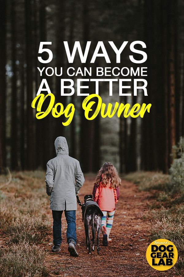 5 Ways You Can Become A Better Dog Owner