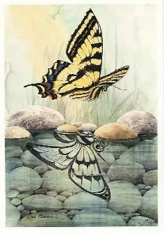 Sue Coleman Canadian Watercolour Artist  Butterfly AC365 (AC36510)