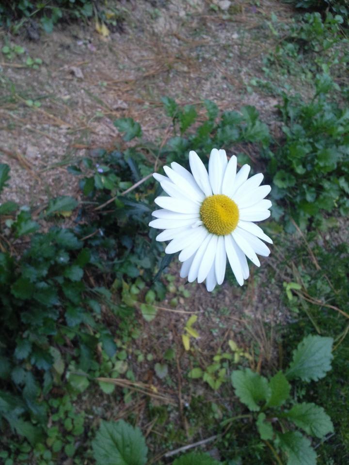 평화를 사랑합니다-Anna kim님이 페이스북에 올려주신 #평화꽃입니다.