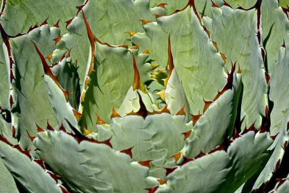 Cactus Photography Succulent Cacti Garden by JenWatsonPhotography, $6.00