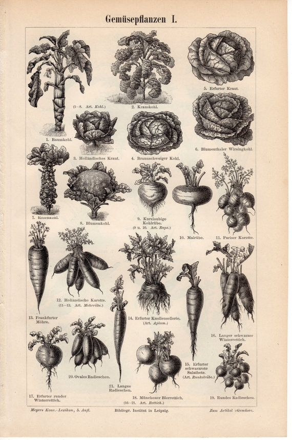 1894 Botanical Print, Vegetables, Roots, Artichoke, Bulb, Tuber, Radish, Carrot, Cauliflower, Brussels Sprout, Beetroot, Kale, Garden, Green