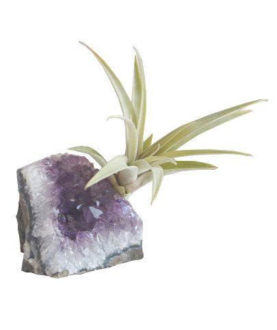 This fairy tale-like desktop delight combines two modern home décor trends into one great gift: a petite air plant attached to a palm-sized purple amethyst geode. Know someone who would love the look, but needs to work on their gardening skills? These hardy plants are some of the easiest varieties to care for, plus each one comes with a care guide to keep things super simple. A duo on an entryway table (think of it as a mini indoor garden!) is as gorgeous as a standalone on a bookshelf or a…