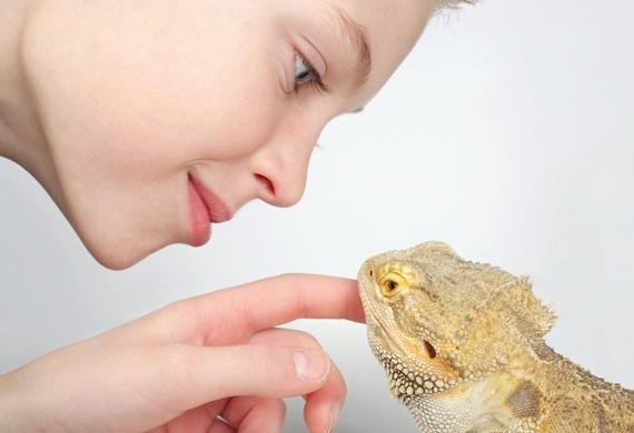 5 Best Classroom Pets | petMD