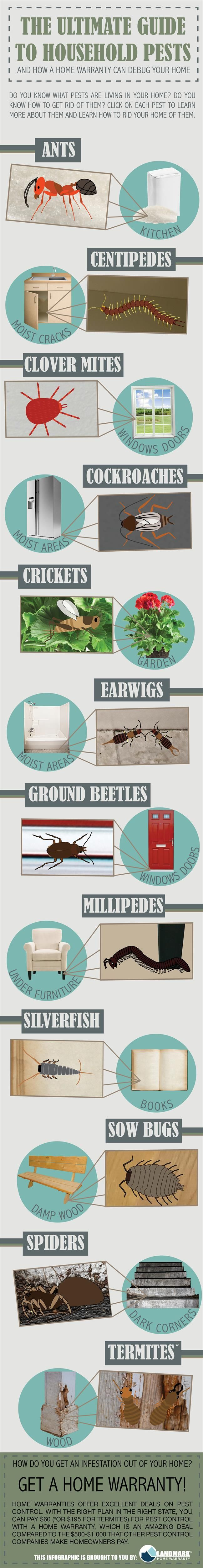 Do you know about household pests? Here is our handy interactive infographic to learn about each common household pest!