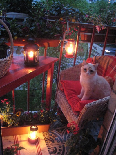 summer balcony: Small Balconies, Ideas, Lantern Lit Balcony, Meow, Balcony Cats, Lanterns