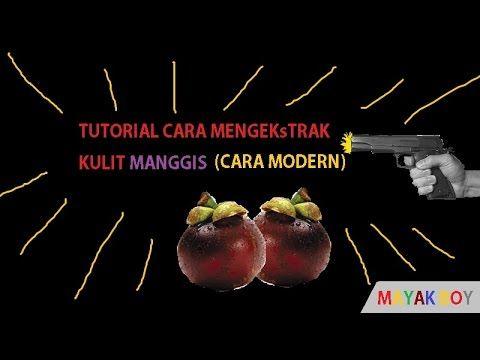 Ekstrak Kulit Manggis Cair ~ Manggis Reference Cara Mengekstrak kulit manggis... (cara modern)