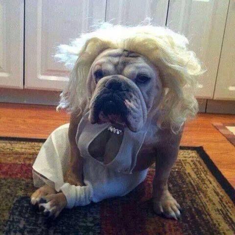 the 26 coolest dog costume ideas for halloween - Dog Halloween Ideas