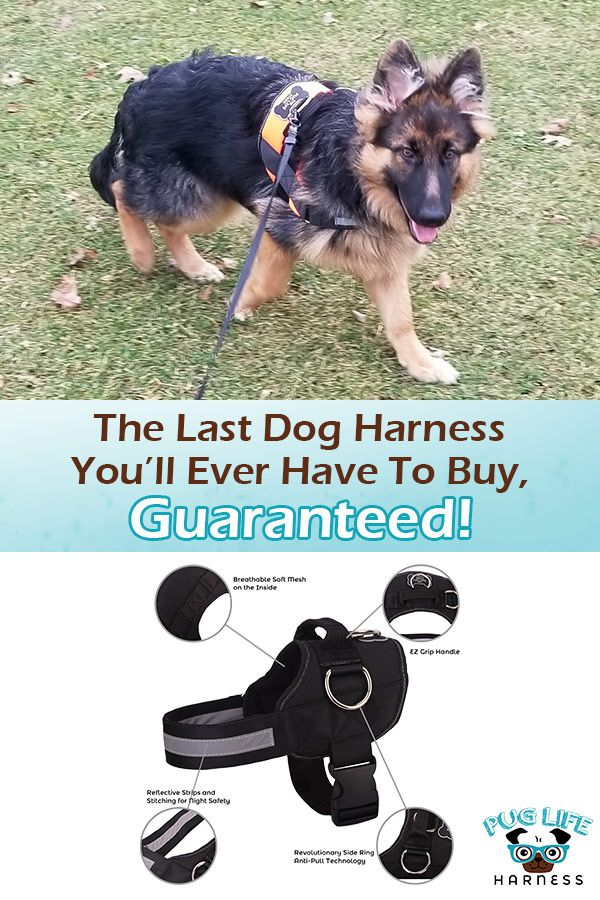 The Last Dog Harness You Ll Ever Have To Buy Guaranteed Dog
