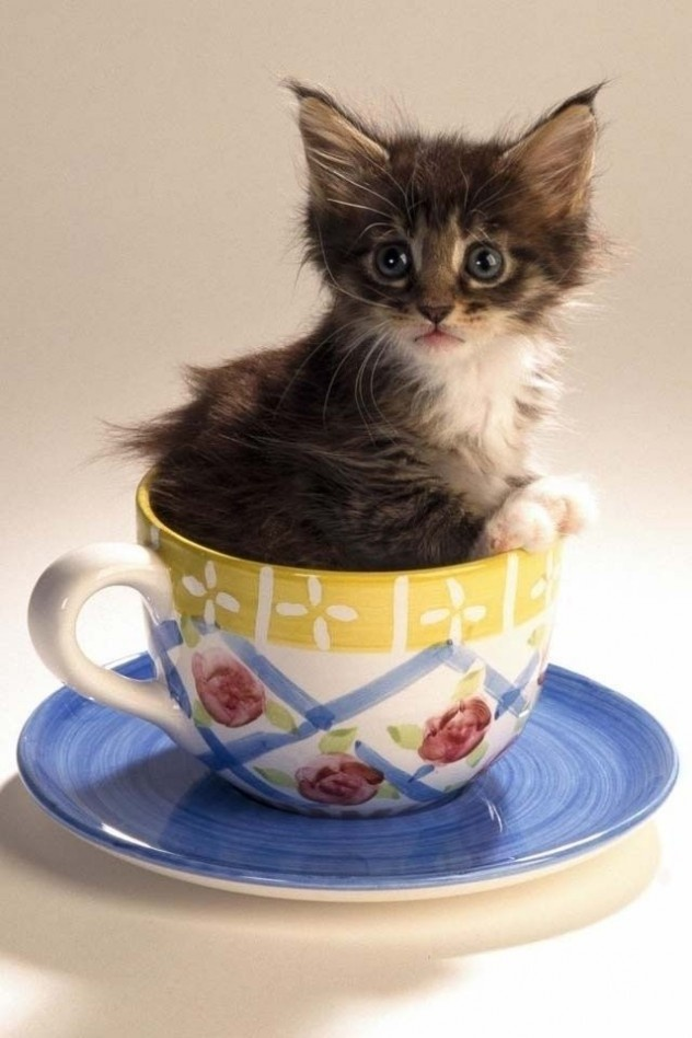 I Heart Cats And Teacups I Heart Cats In Teacups More
