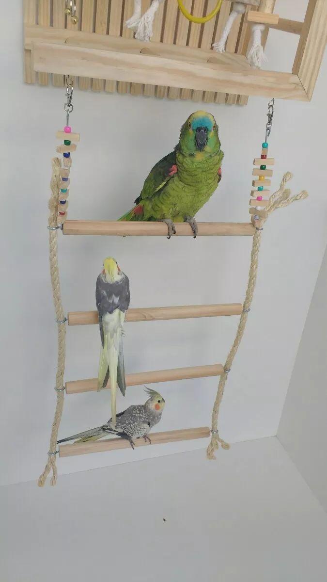 playground parede para papagaio encanto das aves brinquedos