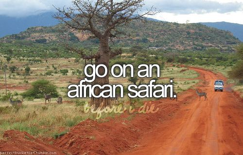 go on an African safari: One Day, Lion, Bucketlist, Teenage Buckets Lists, Africans Safari, South Africa, Before I Die, Animal, Giraffes