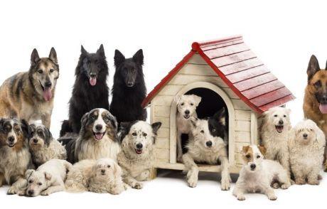 Attualià: Dieci #cani di #grossa taglia in un appartamento condominiale. Ecco come difendersi (condominioweb.com... (link: http://ift.tt/2pvZivG )