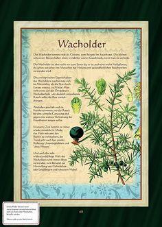 Garten - Kräuter und Pflanzen Steckbriefe Wacholder                                                                                                                                                                                 Mehr
