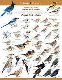 mini posters & instructions on how to ID backyard birds