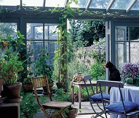 small conservatory by wanderess