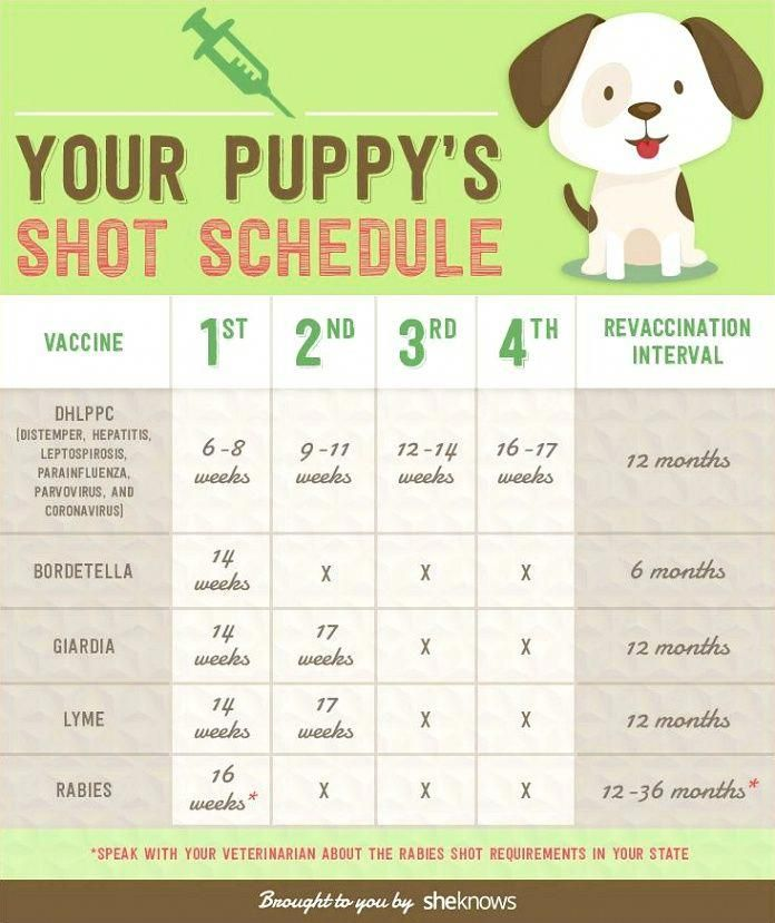 Become The Pack Leader Puppy Shot Schedule Dog Training Training Your Dog