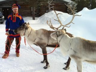 Reindeer are featured on Christmas cards and in movies worldwide this time of year, galloping across the sky with Santa's sleigh in tow.