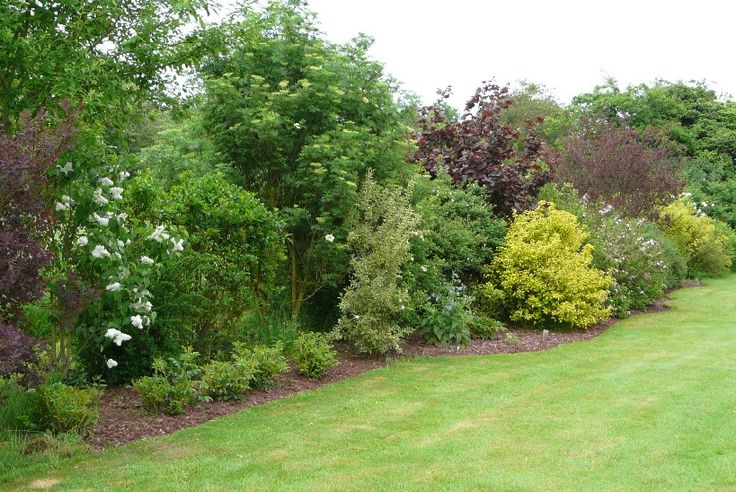 Haie De Jardin Feuillage Persistant -> (fleurs bleues), Ceanothe (fleurs bleues), Physocarpus (feuillage
