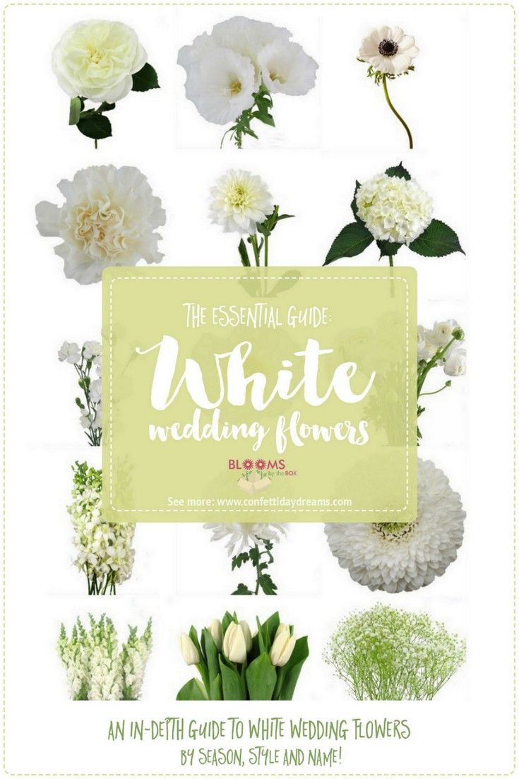 List Of White Flowers New House Designs