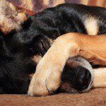 How To Stop Stinky Dog Farts - PetGuide