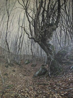 Ultimissime dall'orto: Alle radici: la mostra che parla agli alberi