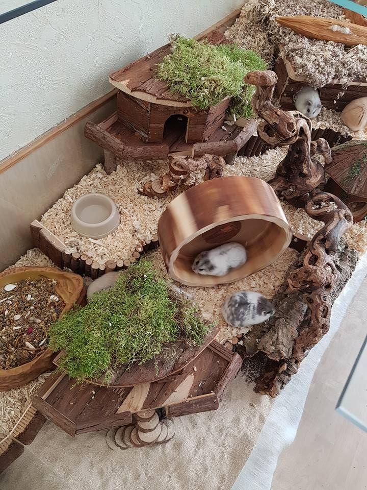 20 Easy & Cheap DIY Chicken Nesting Boxes