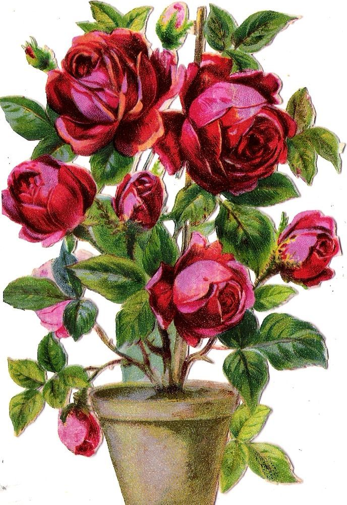 Oblaten Glanzbild scrap die cut chromo Rose 14,5 cm Topf pot