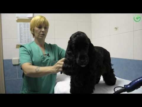 Opinion de las Prácticas Ayudante Técnico Veterinario    http://www.campustraining.es/formacion-curso/veterinaria/88-ayudante-tecnico-veterinario.html?m=249