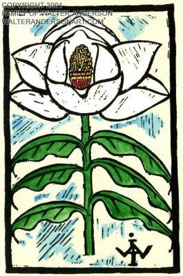 """Magnolia - 13"""" x 19"""" - Walter Anderson"""