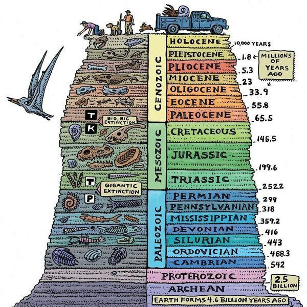 Shows geologic timeline with eras listed and fossils that