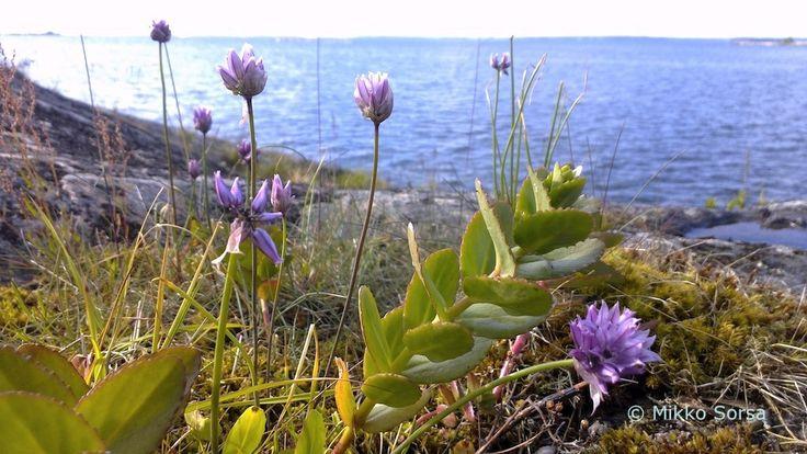 Hangonkylän Metsäkannas ja Sandvikholmen | Visit South Coast Finland