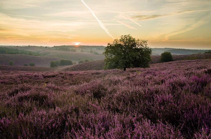 Nationaal Park de Hoge Veluwe, Nederland