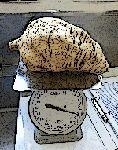 Sweet Potato by Paco-Meijer