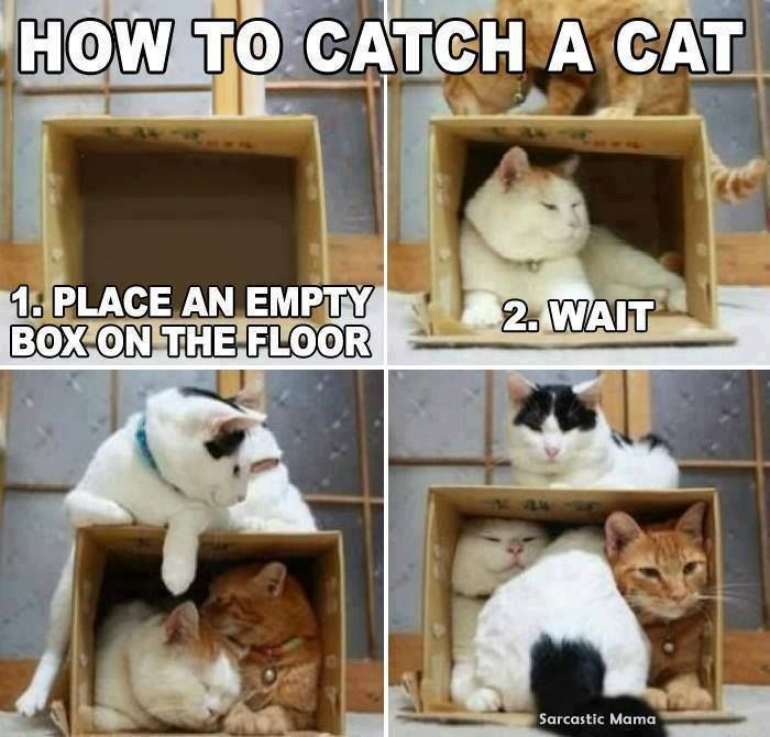 how to catch stray cats and kittens