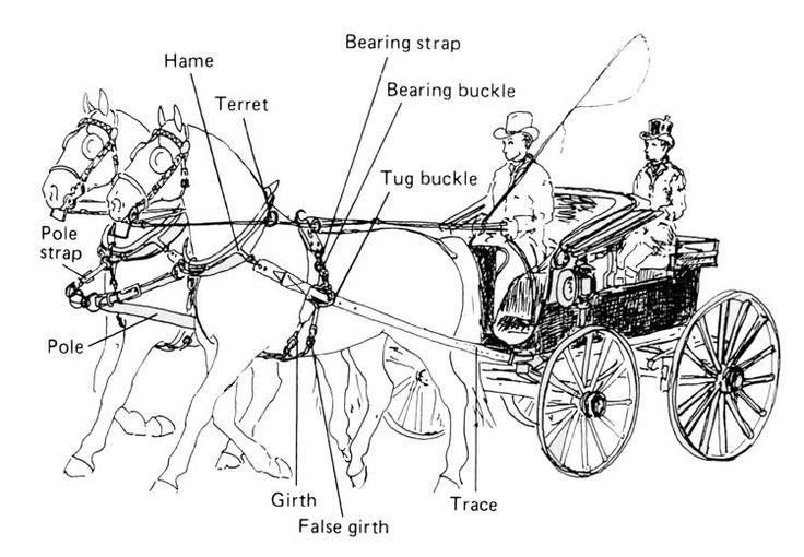 horse harness parts diagram