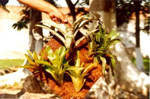 #AçãoSocial #Projeto #PlantandoOFuturo #JardimVertical #FibradeCoco #CocoVerde #CocoVerdeReciclado #Reciclagem #Sustentabilidade #Decoração #Jardinagem #Paisagismo #Arte