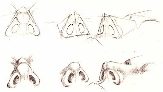 Character Design Noses : Best images about drawing noses on pinterest