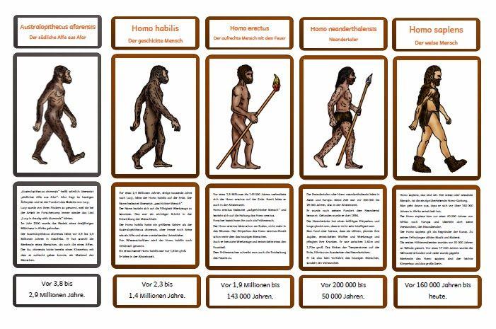 krabbelwiese: Entwicklung des Homo sapiens