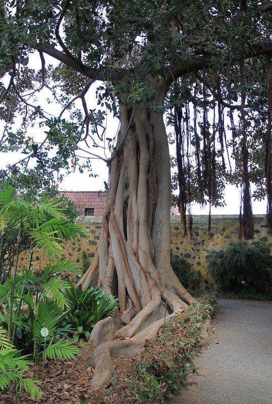 Jardin botanico puerto de la cruz tenerife tenerife for Botanic com jardin