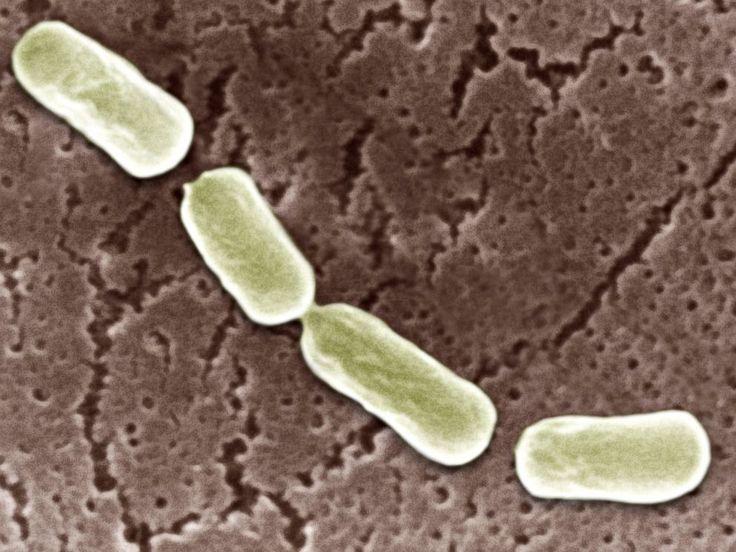 botulinum outbreak